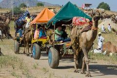 Mela del cammello di Pushkar fotografie stock