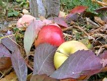 Mela di autunno Fotografie Stock