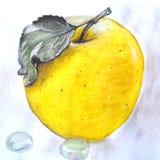 Mela gialla disegnata a mano Fotografie Stock