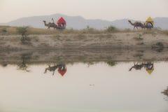 Mela Pushkar στην Ινδία στοκ εικόνα με δικαίωμα ελεύθερης χρήσης