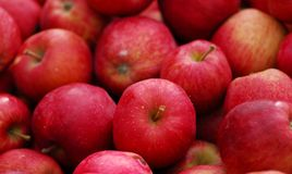 Mela Red Delicious Immagine Stock