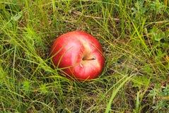 Mela rossa Immagini Stock