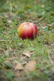 Mela rossa che si trova sull'erba verde Fotografia Stock Libera da Diritti