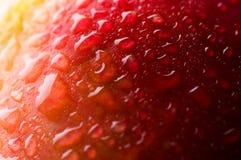 Mela rossa con le gocce dell'acqua Fotografia Stock Libera da Diritti