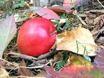 Mela rossa di autunno Fotografia Stock Libera da Diritti