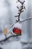 Mela rossa di inverno dello Snowy Fotografia Stock Libera da Diritti
