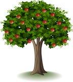 Mela rossa su di melo royalty illustrazione gratis