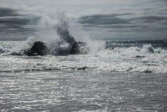 Mela spaccata Abel Tasman NP nuovo Zeland Fotografie Stock Libere da Diritti
