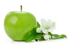 Mela verde con il fiore Fotografia Stock Libera da Diritti