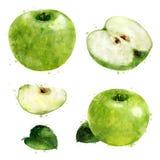 Mela verde su priorità bassa bianca Illustrazione dell'acquerello Immagine Stock Libera da Diritti