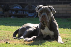 Melaiko de Seiko o cachorrinho bonito super do protetor da princesa Imagem de Stock Royalty Free