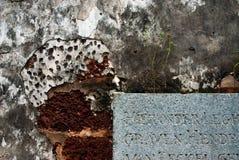 Melakka, Malasia - una pared con el crecimiento de la planta Imagenes de archivo