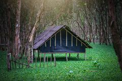 Melaleuca las w pogodnym ranku fotografia royalty free