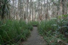 Melaleuca swamp Stock Images