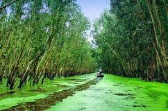 Melaleuca Tra SU Wälder in Dong Thap, Vietnam Stockbild