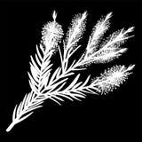 Melaleucatakjes pictogram van het thee het boom geïsoleerde embleem Wit silhouet Vector vector illustratie