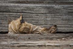 Melancholia jesień Obraz Stock
