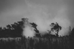 Melancholia. Steam from volcanic vents in Volcano National Stock Photos