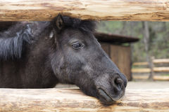 Melancholic лошадь смотря в расстояние Стоковая Фотография RF
