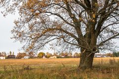 Melancholic autumn landscape. Almost leafless old oak tree on the fading field in a cloudy evening. Melancholic autumn landscape is full of sad harmony. Lonely Royalty Free Stock Photo