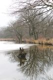 Melancholic autumn at the pond. Bare trees growing on the bank of a partly frozen pond and reflecting on the water surface on melancholic autumn day Stock Photo