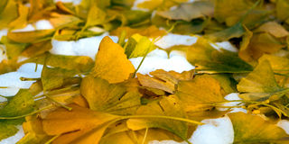Melancholic autumn scene Royalty Free Stock Photography