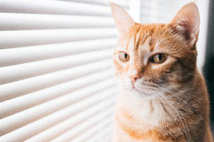 Melancholic cat at window. Melancholic cat watching when sun rise up near the window Stock Image