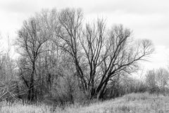 Melancholic tree in winter Royalty Free Stock Images