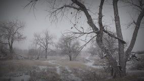 Melancholiczny zima krajobraz 2