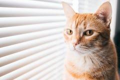 Melancholische kat bij venster Stock Afbeelding