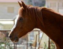 Melancholisches Pferd Stockfoto