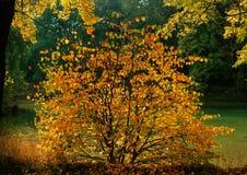 Melancholy of autumn. Illustrations,forests landscape stock images