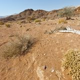 Melancholy and emptiness of the desert in Israel. Royalty Free Stock Photo