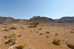 Melancholy and emptiness of the desert in Israel. Stock Image