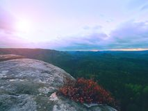 Melancholy sunrise above rocks and fresh green forest, colorful valley full of dense mist Royalty Free Stock Image