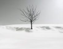 Melancholy tree Stock Images