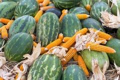 Melancia e milho na palha Fotos de Stock Royalty Free