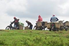 Melancias da colheita quando as estações transitórias Foto de Stock Royalty Free