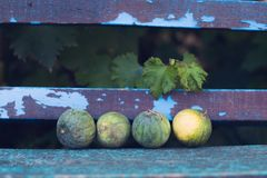 Melancias pequenas em um fundo de madeira velho Foto de Stock Royalty Free