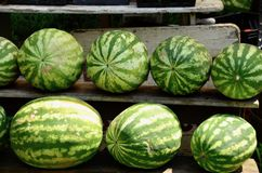 Melancias redondas Fotografia de Stock