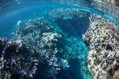 Melanesian Coral Reef Royalty Free Stock Image