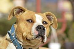 Melanholic and visionary dog Royalty Free Stock Photos