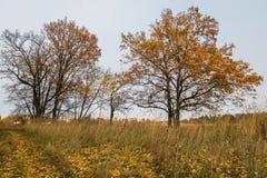 Melankoliskt höstlandskap Nästan avlövade träd på det blekna fältet i den molniga aftonen arkivfoton