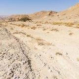 Melankoliskt och tomhet av öknen i Israel royaltyfria bilder
