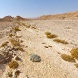 Melankoliskt och tomhet av öknen i Israel arkivbild