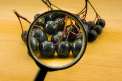 Melanocarpa & x28 Aronia μαύρο chokeberry& x29  στο ξύλινο υπόβαθρο Στοκ εικόνα με δικαίωμα ελεύθερης χρήσης