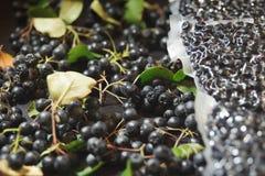 Melanocarpa van Aronia van Chokeberrybessen wordt ingepakt in vacuümzakken en zwarte bessen op donkere lijst stock foto