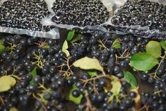 Melanocarpa van Aronia van Chokeberrybessen wordt ingepakt in vacuümzakken en zwarte bessen op donkere lijst stock foto's