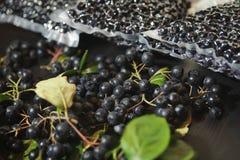 Melanocarpa van Aronia van Chokeberrybessen wordt ingepakt in vacuümzakken en zwarte bessen op donkere lijst royalty-vrije stock foto