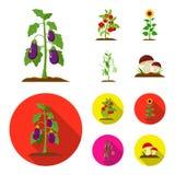 Melanzana, pomodoro, girasole e piselli Icone stabilite della raccolta della pianta nel fumetto, illustrazione piana delle azione Fotografie Stock